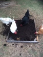 The girls help clean up the empty potato pot