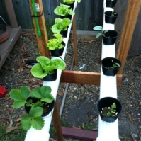 The NFT rails with strawberries and baby brocolli