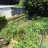 The veggie patch before …