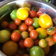 The cherry tomatoes continue to produce day after day